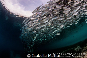 """OCI""