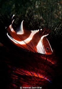 Living between spines. by Mehmet Salih Bilal