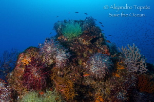 Reef Colors Sea of Cortes, La Paz Mexico by Alejandro Topete
