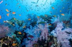 Fiji reef by Jason Sintek