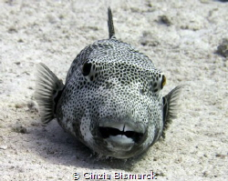 What a big teeth!!!