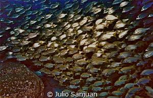 Fish shoal in Isla del Hierro, Canary Islands (Spain) by Julio Sanjuan