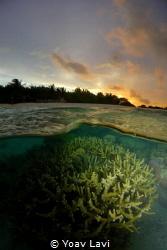 Maldivian sunset by Yoav Lavi