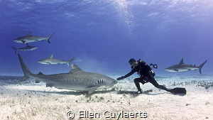 precious planet Earth change needed. Sometimes people are driven fear greed causes damage balance. One victim species sharks cruel act finning decimated numbers 70 they deserve respect protection. needed balance protection