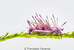 [:b:]White nudi [:/b:]