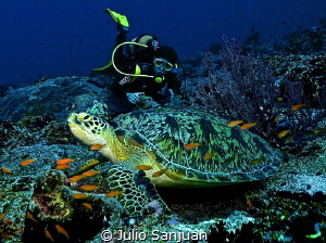 A turtle and Marc in Maldives. by Julio Sanjuan
