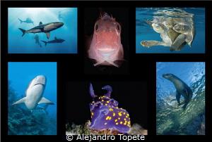 Portafolio ATC by Alejandro Topete