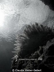 reef life - impressions in B&W