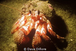 Rainy Day too rough to go out ,Hermit shot under boat anc... by Dave Difiore