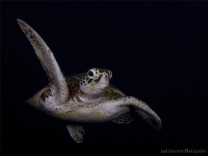 Turtle from Sipadan by Iyad Suleyman