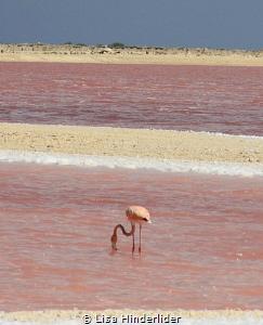Pink on Pink by Lisa Hinderlider