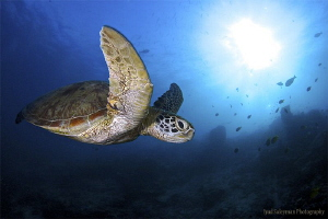 Turtle at mysterious Sipadan by Iyad Suleyman