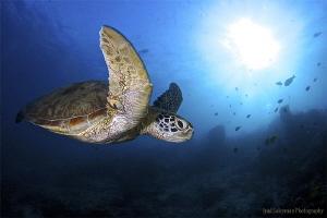 Turtle at mysterious Sipadan by Iyad Suleyman