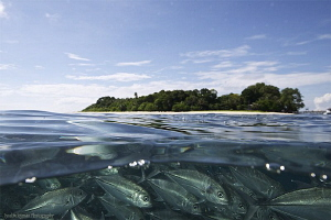 School of Jackfish at Sipadan Island by Iyad Suleyman