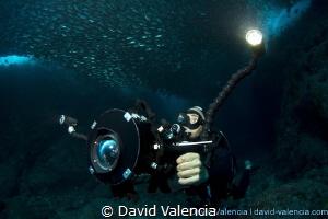 This diver videos a swim through a huge school of green j... by David Valencia