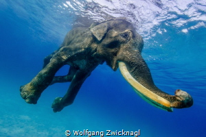 Finally, another shot from the Rajan serie. It´s my favor... by Wolfgang Zwicknagl