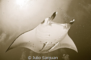 Manta in Maldives by Julio Sanjuan