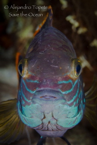 Close Up fish, Las Estacas Mexico by Alejandro Topete