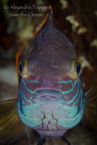 Close Up fish, Las Estacas Mexico by Alejandro Topete