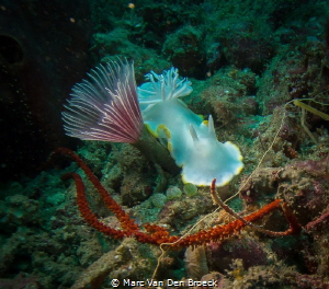 white nudi with umbrella by Marc Van Den Broeck