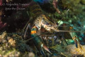 River Shrimp, Las Estacas Mexico by Alejandro Topete