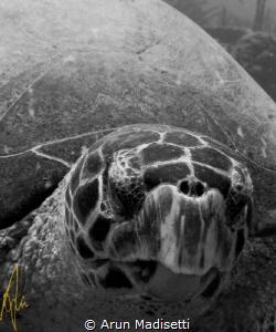 "Thats ""Mr Turtle to you, punk!"" SeaLife DC800 by Arun Madisetti"
