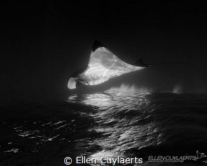 Fata Morgana  Would have loved to capture a manta breac... by Ellen Cuylaerts