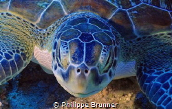 Turtle by Philippe Brunner