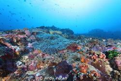Nusa penida, crystal bay by Andy Yufan