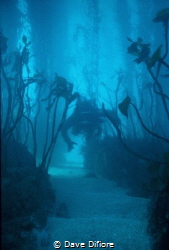 Through the Kelp Beds by Dave Difiore