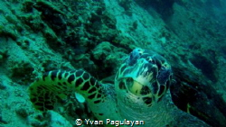 upclose and personal by Yvan Pagulayan