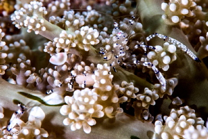 Shrimp's body looks like an optical glass, not acrylic! by Mehmet Salih Bilal