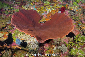 I <3 diving in the Caymans!  Massive sponge along the ver... by Patrick Reardon