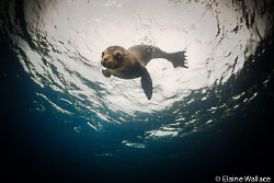 Playful pup in the Galapagos by Elaine Wallace