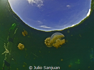 Reflections in Jellyfish lake in Palau by Julio Sanjuan