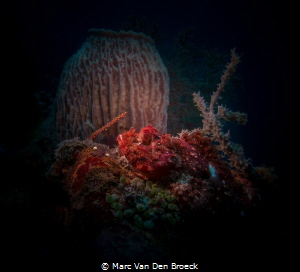 sponcescorpionfish by Marc Van Den Broeck