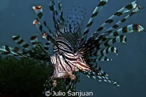 Lionfish. by Julio Sanjuan