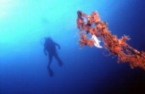 DIVER & FISH EGGS/ Saronic Gulf, Nikonos V 35 mm, FUZI 10... by KARELAS GEORGE