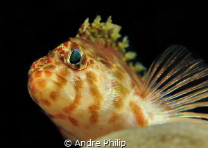 a provoking look from behind a coral by Andre Philip