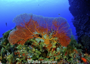 Gorgonian. Nikon D70, 10.5mm, 2 strobes Inon. by Julio Sanjuan