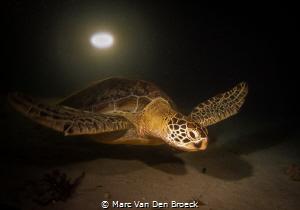 night turtle by Marc Van Den Broeck