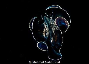 Dance show in the night. by Mehmet Salih Bilal