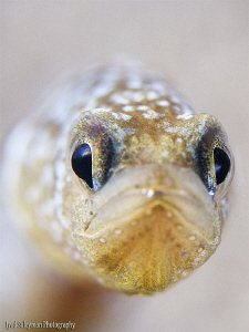 Yellow Garden Eel by Iyad Suleyman