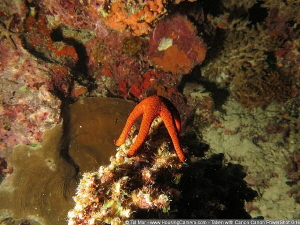 Posing Starfish -- My photos are uploaded for testing pur... by Tal Mor