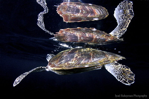 Turtle with magic reflection by Iyad Suleyman