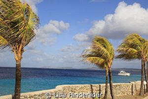 Breeze over Bari. by Lisa Hinderlider