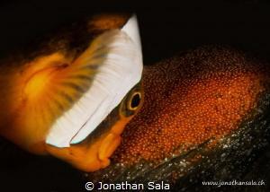 Nemo & Son's by Jonathan Sala