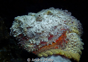 Stonefish - Portrait by Andre Philip