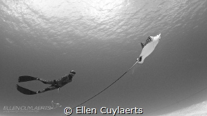 Freediver meets Eagle Ray by Ellen Cuylaerts
