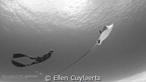 Freediver meets Eagle Ray
